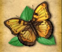 Schmetterling und Papagei
