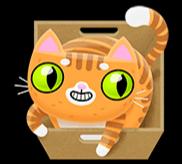 Orange Katze
