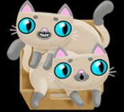 Zwei graue Katzen
