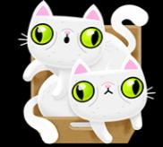 Zwei weiße Katzen